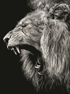 Unknown artist Scratchboard sketch of lion either yawning or roaring. Very fine details, and the lights and darks are well used. Nice contrast of lion with background. This artist must be seriously talented, like this is SO good! Gravure Illustration, Illustration Art, Kratz Kunst, Scratchboard Art, Scratch Art, Wow Art, Arts Ed, Wildlife Art, Art Plastique