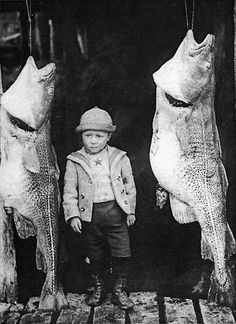 Cod Fishing, Newfoundland ... Photo courtesy Provincial Archives of Newfoundland and Labrador