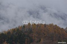 Wolkenverhangene Berge über dem Hofwald von Innsbruck