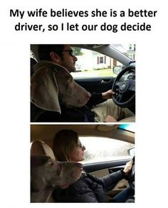 Dog's reaction when i drive vs when my wife drives - LOL Indian - Funny Indian Pics and images Funny Kids, Funny Cute, The Funny, Daily Funny, Funny Animal Pictures, Funny Photos, Funny Animals, Crazy Pictures, Beer Pictures