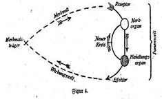 laser verde prostata wikipedia de