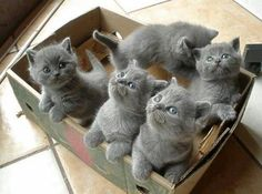 Chatons mignons tout gris