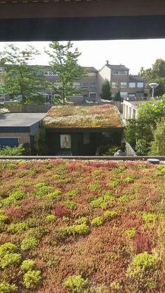 Inspiratie: een groendak als groen uitzicht en groene buitenruimte