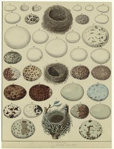 Eggs by PaperScraps, via Flickr