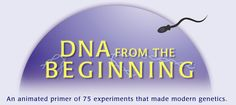 "DNA from the Beginning. A great resource including classical genetics with plenty of ""insider"" info, experiments and animations!"