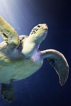Turtleby Patrick Rosykon 500px