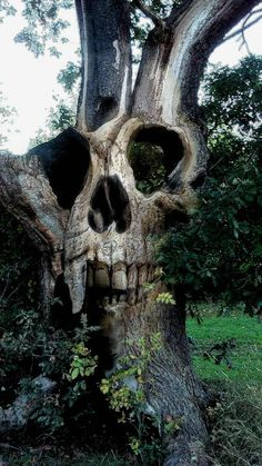 Awesome skull carving embedded in an ancient tree Magical Tree, Tree Carving, Art Brut, Skull And Bones, Skull Art, Tree Art, Oeuvre D'art, Macabre, Dark Art