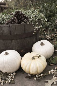 White pumpkins for a fall wedding - @Jessamine Proctor-Marcin Proctor-Marcin Toledo - use these instead of flowers for table decor and paint 'em seafoam!