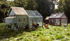 Williams-Sonoma, chicken coop, mobile chicken house, agrarian designs, sustainable design, garden eco design, green design