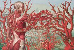 Anatomical Illustrations by Juan Gatti