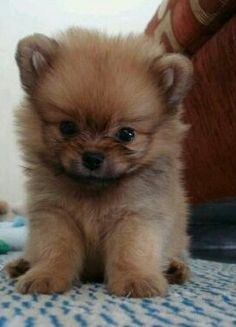 Cutest puppy ever ! :)