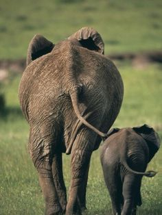 Mom and Baby Elephant...walking in-step! So cute.