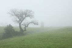 photos of foggy landscapes - Google Search