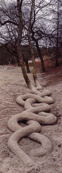 'Incredible Serpentine Tree Roots' by Andy Goldsworthy who sculpted the roots freehand with sand and mud. A sculpture, piece of art and photograph in one. http://laurencarrphoto.blogspot.com/2012/03/andy-goldsworthy-analysis.html#  #Tree_Roots #Andy_Goldsworthy