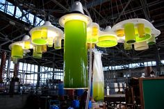 Denise King | growth and DK :: Algae Chandelier