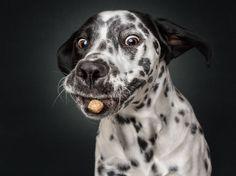 Hilarious Photos Of Dogs Eating Treats-Fuzzfix