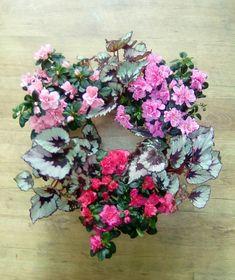 Begonia Rex and Azaleea wreath Begonia, Floral Wreath, Wreaths, Flowers, Plants, Decor, Floral Crown, Decoration, Door Wreaths
