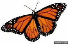 Resultado de imagem para animated butterfly gif,funny butterfly gif,gifs of butterfly.