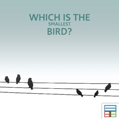 The bird live in Cuba. #Quiz #Kids