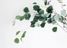 7 free printable photographs of plants to make you own gallery wall. Make your home an urban jungle without killing anymore houseplants. Instagram Display, Gallery Wall Bedroom, Printable Pictures, Plant Art, Photo Canvas, Free Pictures, Picture Wall, Printable Wall Art, Flower Art
