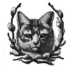 cat with pussywillow vintage clip art