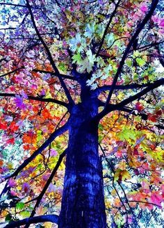 Beautiful Tree ~ Dreamy Nature