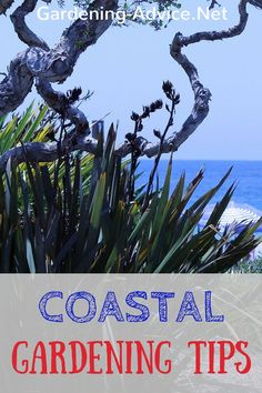 Having a garden in a coastal location forces you to have a different approach to gardening. If you garden here like in an inland garden you are more than likely going to fail. Coastal gardening means thinking about shelter from wind and choosing seaside plants that will withstand the maritime climate.