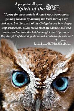 owl as spirit animal Spirit Animal Totem, Animal Spirit Guides, Owl Quotes, Wisdom Quotes, Animal Meanings, Animal Medicine, Pomes, Dragons, Power Animal