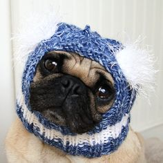 I'm so ordering this for my pug.