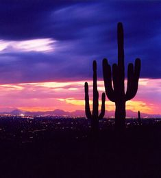 Tucson, Arizona -- some of the best sunsets I've seen in all my travels, and so close to home <3