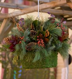 """Winters Wow """"Moss Medely"""" Assembled Hanging Basket"""