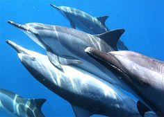 Dolphins sleep with half a Brain & half an Eye