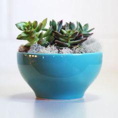 Mini Jardim Bowl Azul
