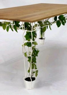 Una mesa verde. Tomado de la Bioguia