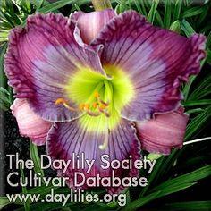 Daylily Paw Print