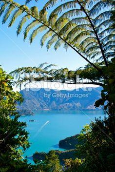 Looking out through native New Zealand/ Aotearoa Punga or Ponga Fern. Maori Legends, Marlborough Sounds, Kiwiana, Travel Goals, Image Now, New Zealand, Royalty Free Stock Photos, Amp, Photography