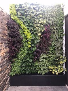 Vertical Garden Plants, Vertical Garden Design, Vertical Plant Wall, Home Landscaping, Tropical Landscaping, Jardin Vertical Artificial, Garden Wall Designs, Garden Screening, House Plants Decor