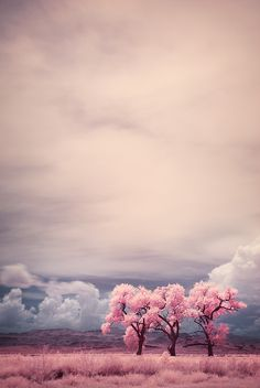 Surreal // lindo // árvore // paisagem // rosa // céu // <3