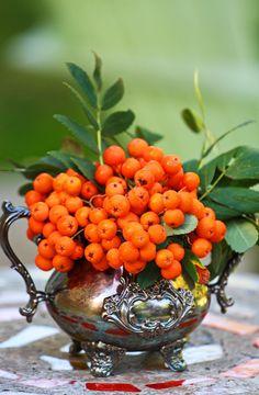 Berries in copper