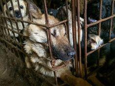 La polizia dello Anhui ha arrestato otto persone per avere venduto qualcosa come 200.000 siringhe dotate di una dose ... #animali #Cina #abusi