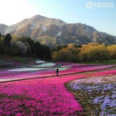 Exploration & Photo by @mo__nao Location / Hitsujiyama Park, Chichibu, Saitama, Japan
