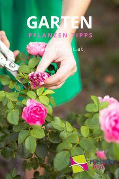 Einen Garten richtig zu pflegen ist gar nicht so einfach. Stöbere doch in unserem Garten Blog. Dort findest du hilfreiche Tipps zu Gartenpflege, Pflanzen und vieles mehr.
