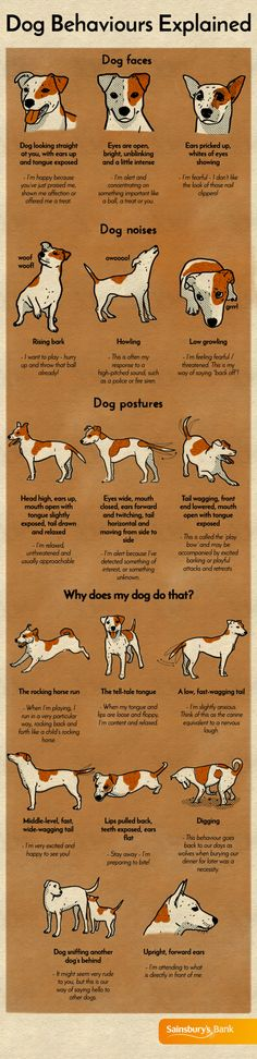 Dog behaviours explained | Visual guide | Sainsbury's Bank