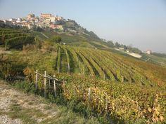   ♕   La Morra, Piemonte, Italy   by © Jackie Parsons Northern Italys hilltop village La Morra is the home for world-famous Barolo wine. Barolo Wine, Virginia Wineries, Wine Case, World Famous, Vineyard, Italy, Places, Lovers, Life