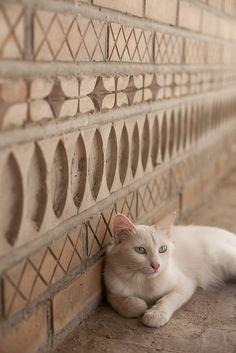 Mominjons cat, Bukhara Uzbekistan.
