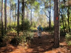 Florida Trail, Cross Florida Greenway
