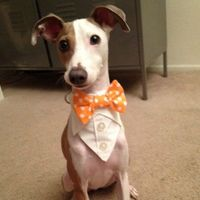 Tuxedo Bandana Bow Tie  Think I've found the gift for Franklin