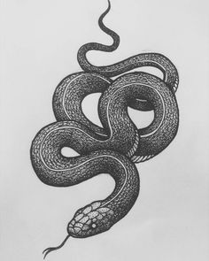 Finished this one at an airport bar Art And Illustration, Pin Tattoo, Gothic Tattoo, Snake Design, Snake Tattoo, Black Tattoos, Tattoo Drawings, Blackwork, Cool Art
