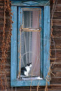 Cat in the window by von Norbert Weiss