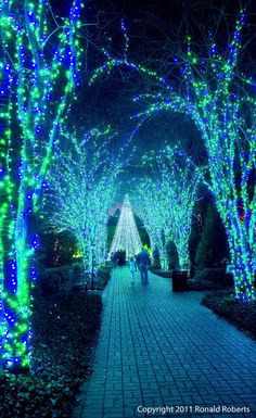 I want my future wedding here, lol / Holiday Walk, Atlanta Botanical Garden - USA >>> gorgeous! I kind of wish we could have holiday lights all year round. Atlanta Botanical Garden, Botanical Gardens, Kunst Party, Image Bleu, Parks, Winter Wonderland, Electric Forest, Holiday Lights, Blue Christmas Lights